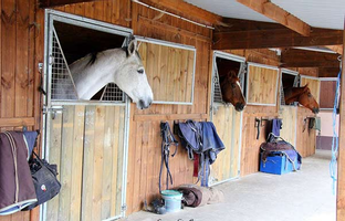 image result : Pension chevaux - Ecuries Sainte Anne