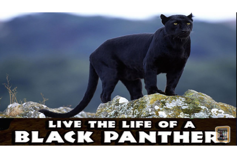 Panther Simulator -PART 1- By Gluten Free Games ...
