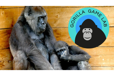 Gorilla Game Lab - YouTube