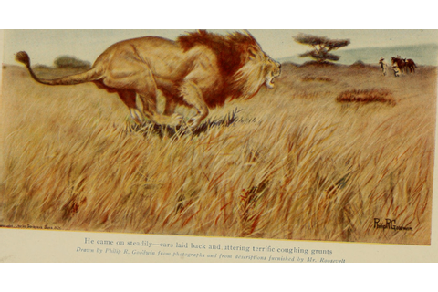 File:African game trails; (1910) (17918654676).jpg ...