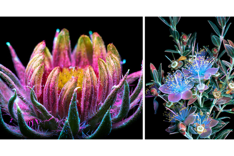 Dazzling Images of Glowing Flowers Photographed With ...