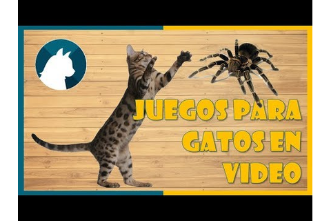 Juego para gatos en video 🐾 - Games for cats🕷 - YouTube
