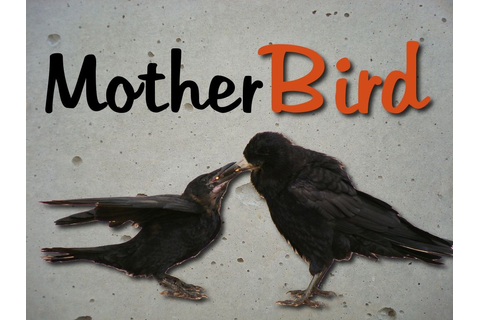 mother bird....Good party game...or maybe sibling conflict ...