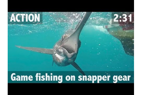 GAME FISHING ON SNAPPER GEAR - YouTube