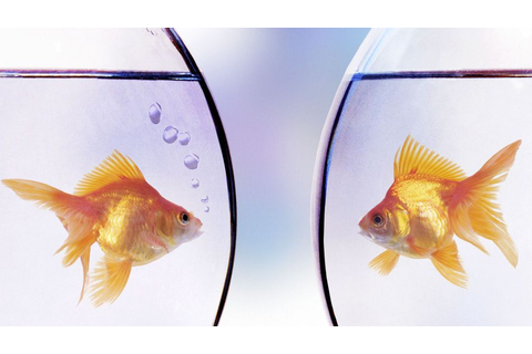 Goldfish racing: America's next controversial drinking game