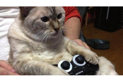 Cats Are Very Serious About Video Games | Kotaku Australia