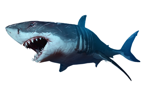 Sharks PNG images free download, shark PNG