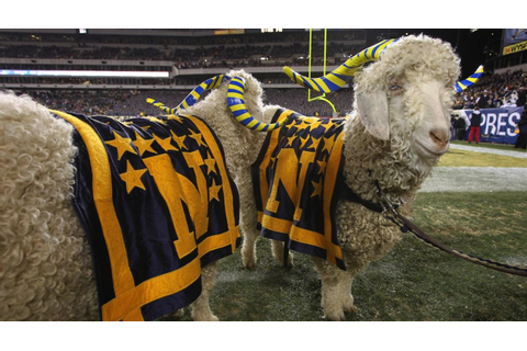 Army vs. Navy game: Bill 36 goat cleared after food ...