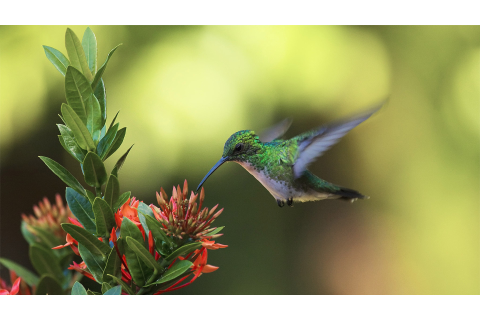 Colibri Wallpapers High Quality | Download Free