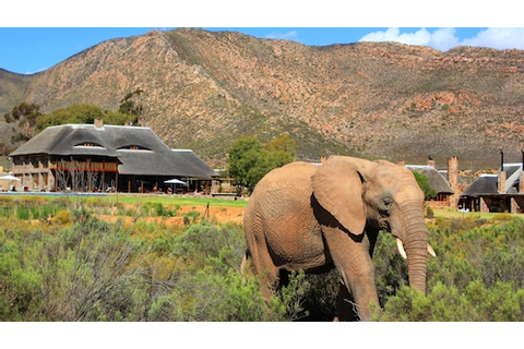 Big 5 Safari with Lunch at Aquila Private Game Reserve ...