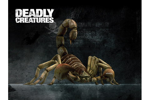 Scorpion | Deadly Creatures Wiki | Fandom powered by Wikia