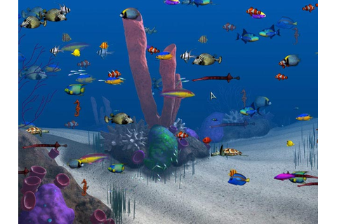 Play Big Kahuna Reef > Online Games | Big Fish