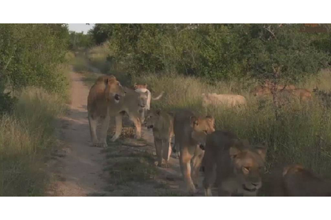 Virtual safaris show animals emboldened by lockdown in S ...