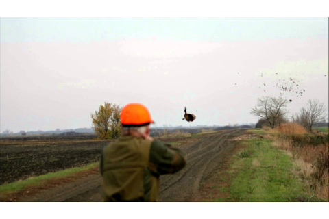 Chasse au petit gibier en Hongrie / Small game hunting in ...
