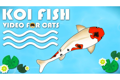 CAT GAMES FISH - Catching Koi Fish. Video for Cats to ...