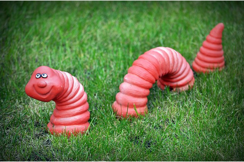Willy The Worm | Flickr - Photo Sharing!