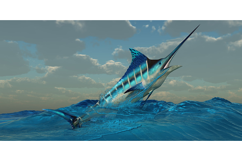 Blue Marlin Burst Stock Photo - Download Image Now - iStock