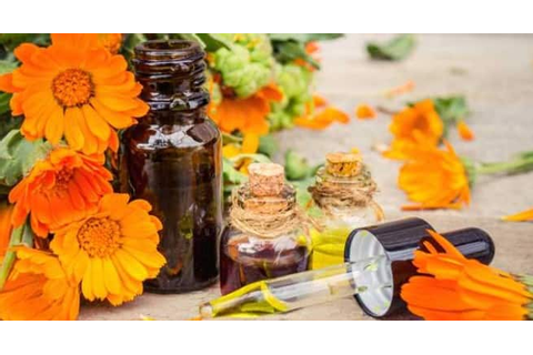 Use calendula to up your beauty game! - Read Health ...