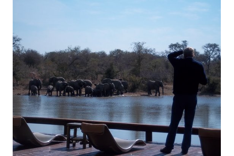 Gomo Gomo Game Lodge (Hoedspruit, South Africa): Top Tips ...