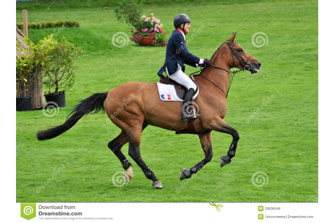 Horse Gallop editorial stock photo. Image of horses, game ...