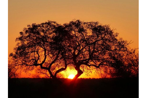Sunset Game Drive - Foto van Serondella Game Lodge ...