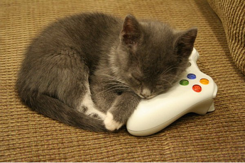 VIDEO GAME THEIF!!! - Cats Photo (34334063) - Fanpop