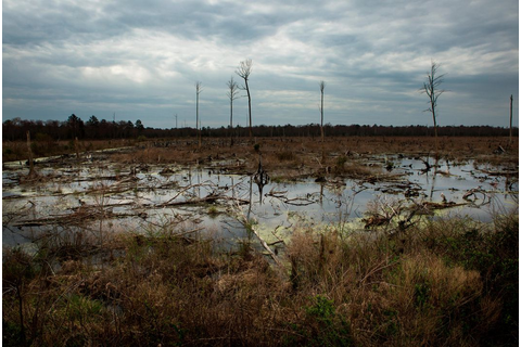 Deep in the Swamps, Archaeologists Are Finding How ...