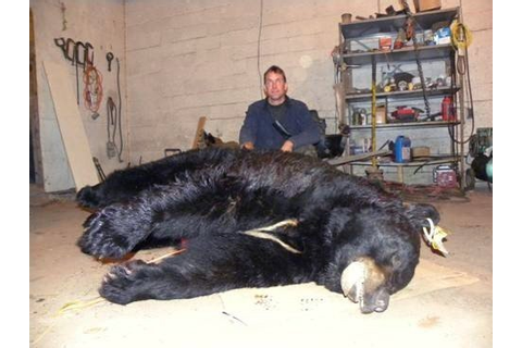 Record-breaking Pennsylvania bear bagged in Pike County ...