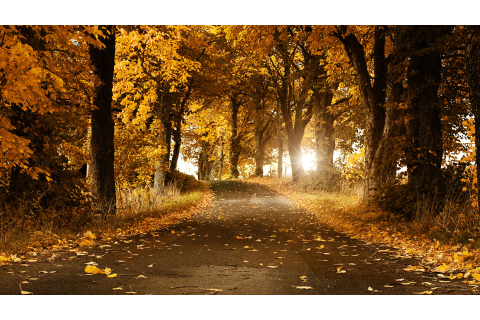 nature, Fall, Road Wallpapers HD / Desktop and Mobile ...