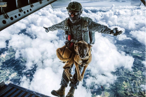 Combat dog : dogswithjobs