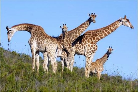 Botlierskop Private Game Reserve (Mossel Bay, South Africa ...