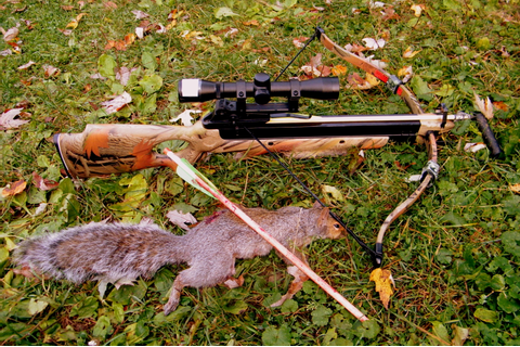 crossbows | The journey towards homesteading and self reliance