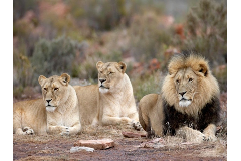 Aquila Game Reserve Day Trip | Jenman African Safaris
