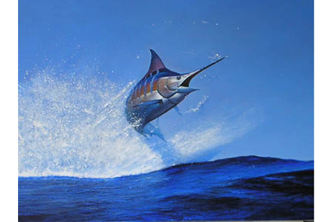Blue Marlin - National Fish of The Bahamas - Government ...