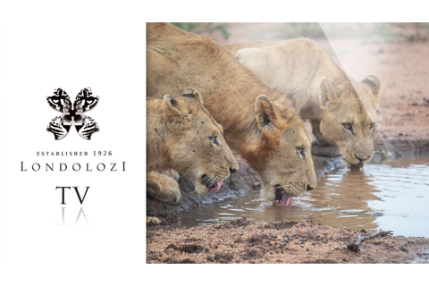 Virtual Safari: Ultimate Game Drive Highlights #5 ...