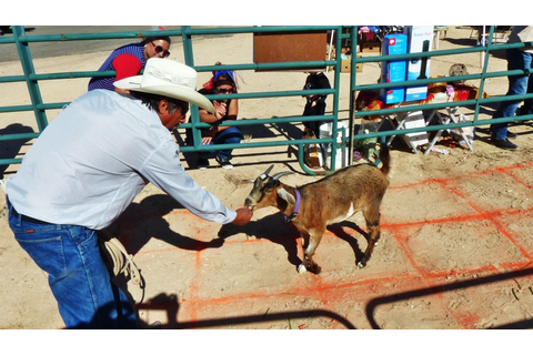 Goat Bingo: Yucca's Best Game Ever – Jan Emming