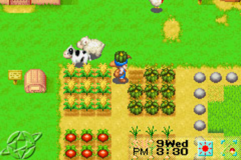 Anonymous : Harvest Moon - Friends Of Mineral Town ( FoMT ...