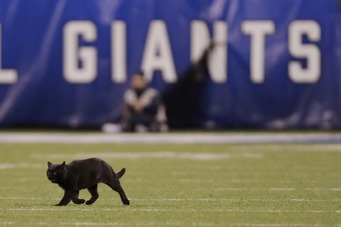 Shades of '69: Black cat scampers on field at Cowboys ...