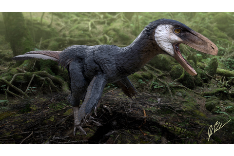 Pectinodon | Saurian Wikia | FANDOM powered by Wikia