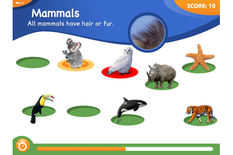 Animal Genius > iPad, iPhone, Android, Mac & PC Game | Big ...