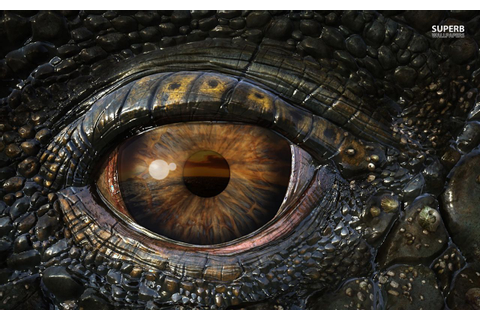 Dragons Eye Hd Smartphone Background | Eyes wallpaper ...