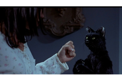 CAT OF THE DAY 020: SCARY MOVIE 2 | CATS ON FILM