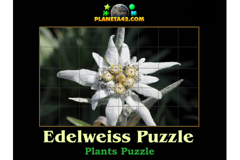 Edelweiss Puzzle | Online Nature Puzzle