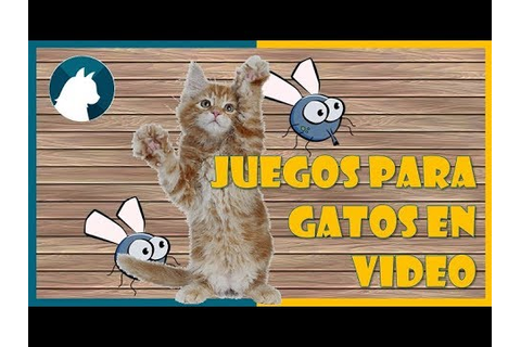 Juegos para gatos en video 🐾 - Game fot cats 🐝 - YouTube