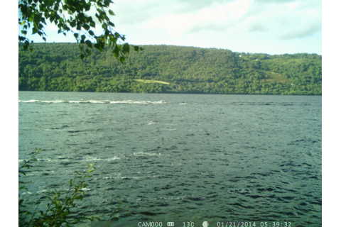LOCH NESS MONSTER: Some Game Camera Pictures