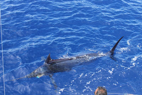 Big Game Fishing Mauritius by JPH Charters