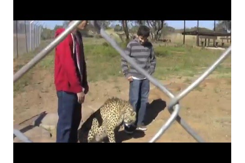 Virtual Safari-Zebula Game Lodge - YouTube