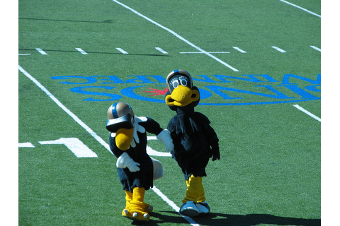 Buzz and Boomer Dancing | Went to the Winnipeg Blue Bomber ...