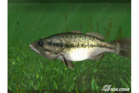 Download / Télécharger Rapala Tournament Fishing Wii ...