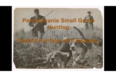 Rabbit Hunting with Beagles. Small Game in Pennsylvania ...
